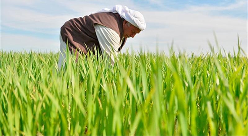 65 yaş üstü çiftçilere ekim dikim için 'özel izin' önerisi