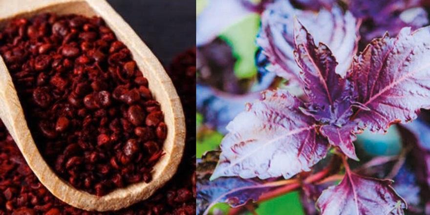 Koronavirüsüne karşı bitkisel tedavi yöntemi
