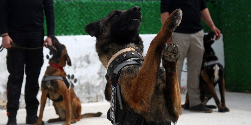 Dedektör köpeklerden 'Evde kal' çağrısı
