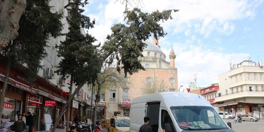 Urfa'da eğilen ağaç tehlike saçıyor
