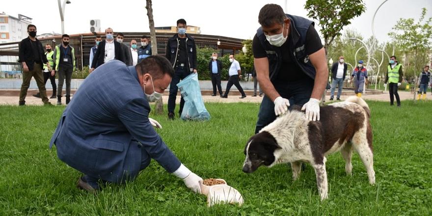 Beyoğlu sokak hayvanlarına mama bıraktı