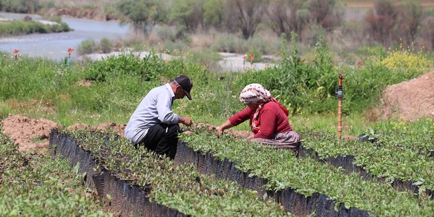 İşçiler 1 Mayıs'ta da iş başında