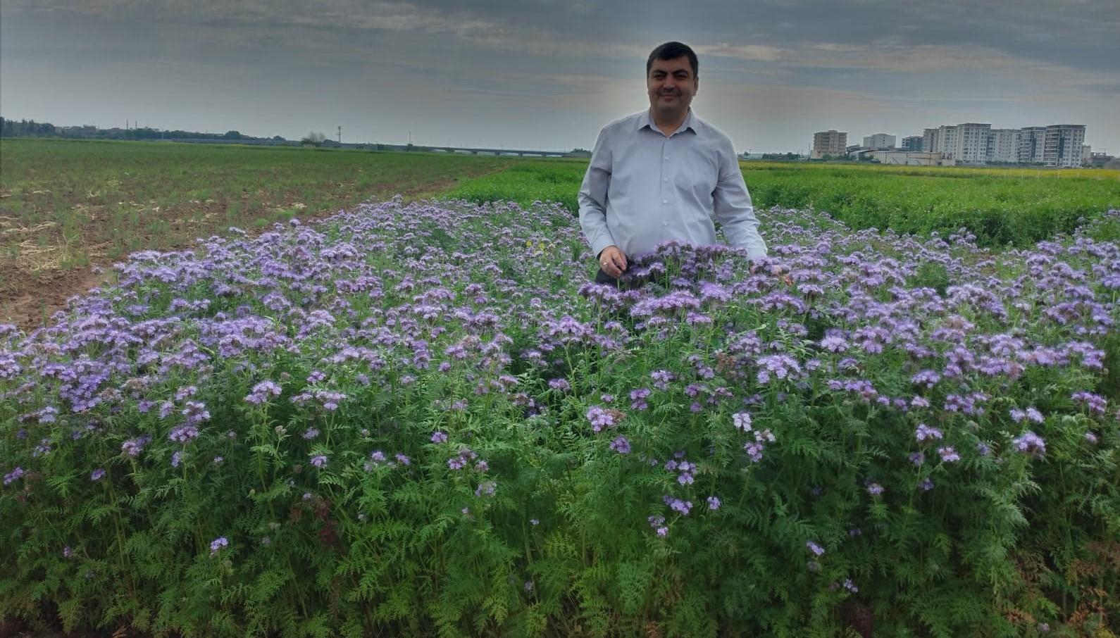 Diyarbakır'da verimli bal için arı otu yetiştiriliyor