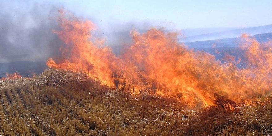 Prof. Dr. Satar: Anız yangınları 40 canlı türünü etkiliyor