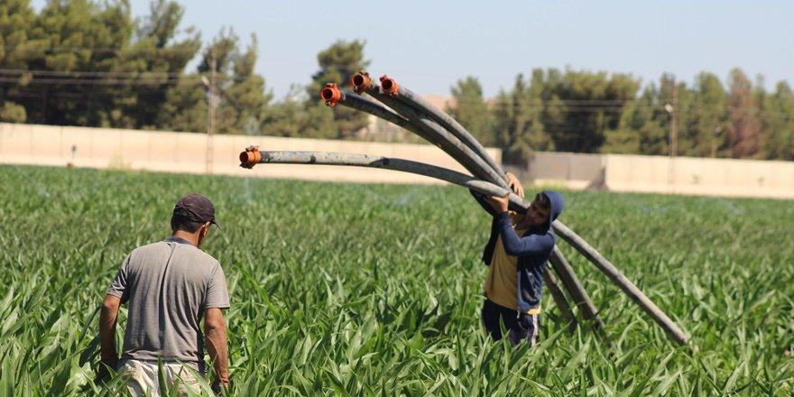 Şanlıurfa'da tarım işçileri bayramda çalışmayı sürdürüyor