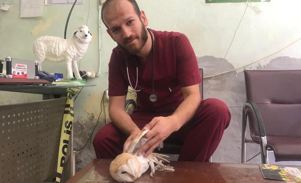 Diyarbakır'da yaralı bulunan peçeli baykuş tedavi altına alındı