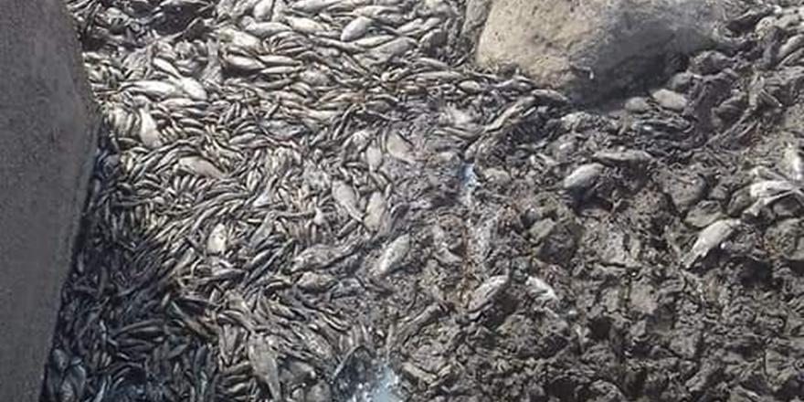 Diyarbakır'da balçıklaşan gölde binlerce balık telef oldu