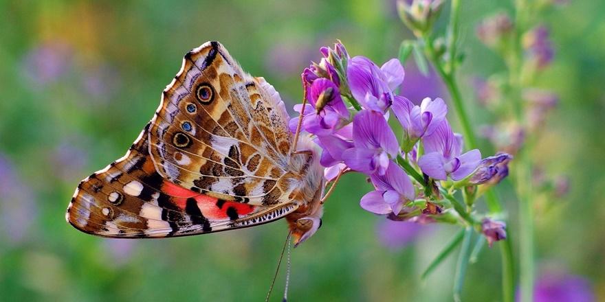 Diyarbakır'ın kelebekleri Hong Kong'da