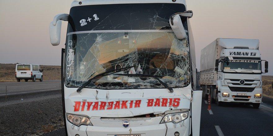 Urfa'da yolcu otobüsü tıra çarptı: 1 yaralı