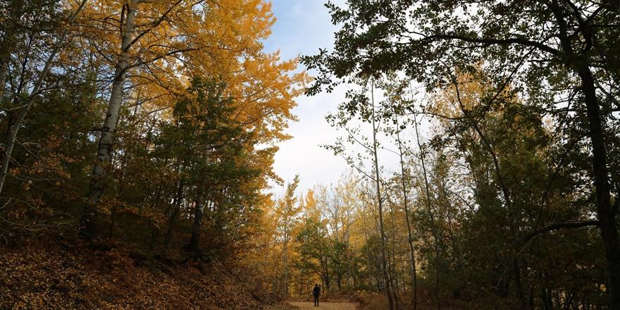 Dersim'de sonbahar güzelliği renk cümbüşü sunuyor
