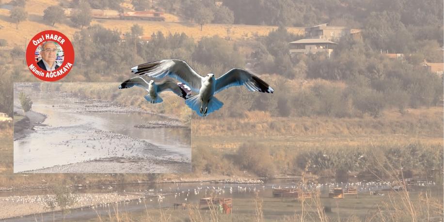 VİDEO - Diyarbakır'ın da martıları var
