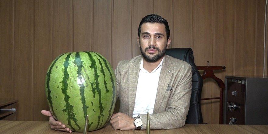 Diyarbakır Kulp'ta 48 kiloluk karpuz yetiştirildi