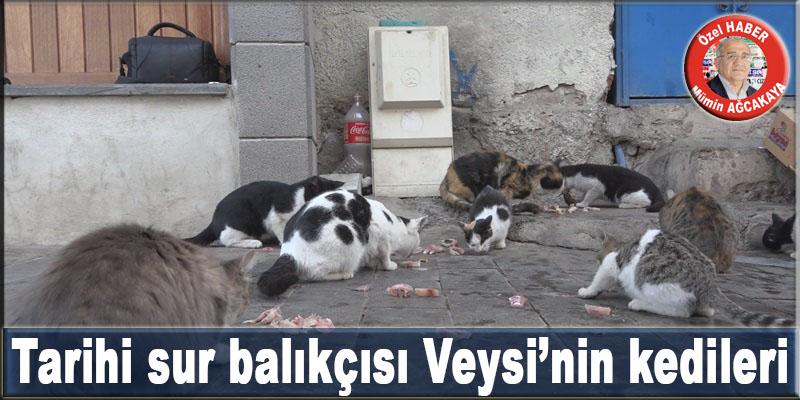 VİDEO - Tarihi sur balıkçısı Veysi'nin kedileri