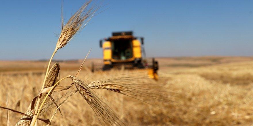 Diyarbakır'da 'Empire' buğday çeşidi geliştirildi