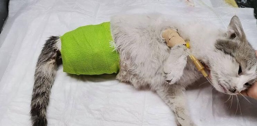 Diyarbakır'da bir kedi ayakları kesilmiş halde bulundu