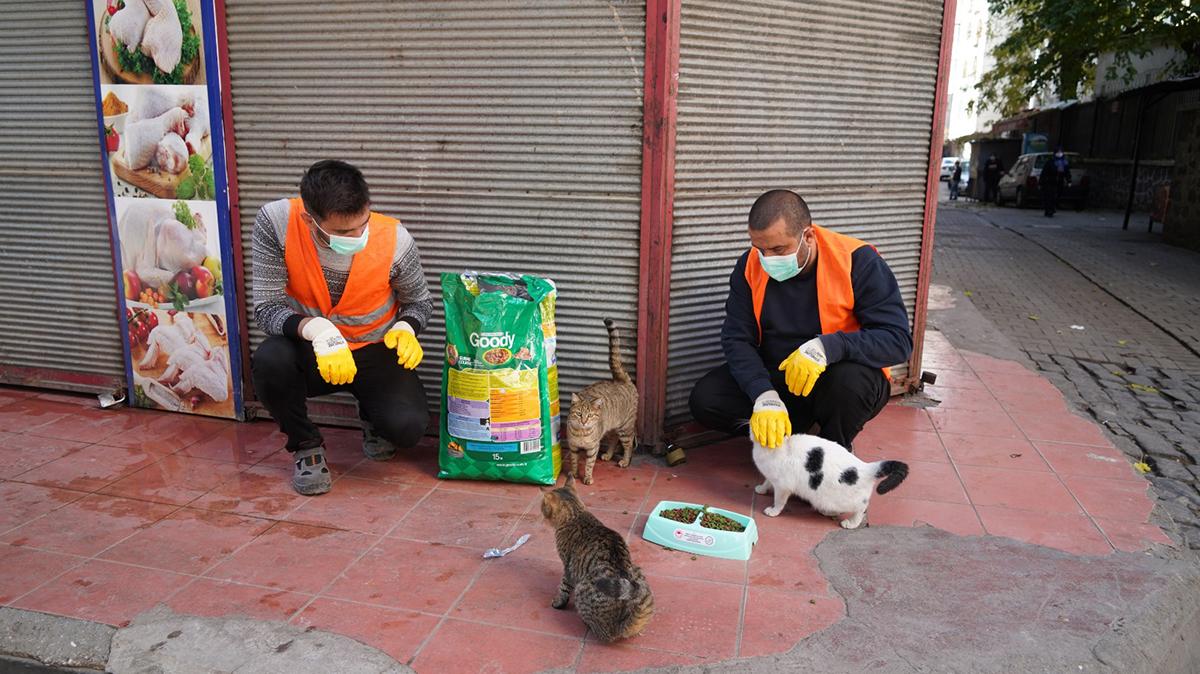 Diyarbakır Belediyesi sokak hayvanlarını unutmadı