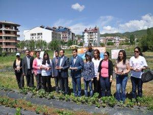 Tunceli'de emekler çileğe çilekler reçele projesi
