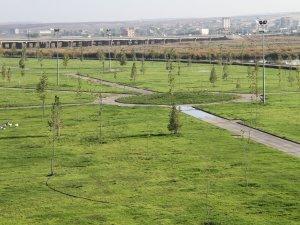 Halil İbrahim Oruç parkı 90 dönüme ulaştı