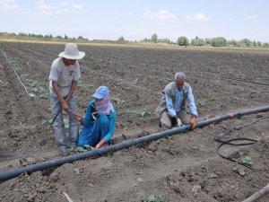 Çözüm süreci tarımı artırdı