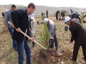 DSİ Silvan barajı etrafında fidan dikti