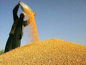 Bölgenin buğday mamulleri Ahlat'tan
