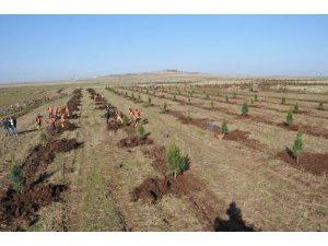 """Diyarbakır Kent Ormanı """"Konut Rezerv Alanı"""" ilan edildi"""