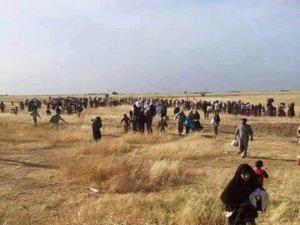 DAİŞ Akçakale sınırında 100'e yakın sivili katletti