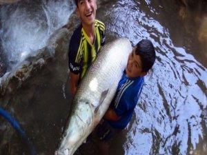 Dev balık Hakkari'de yakalandı!