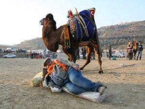 Rütbeli deve…
