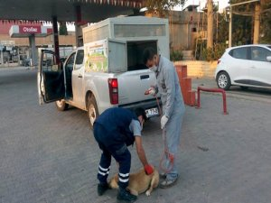 Ceylanpınar'da başıboş köpekler operasyonu
