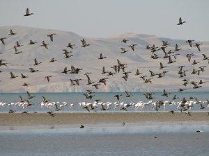Kuş cennetti: Vangölü