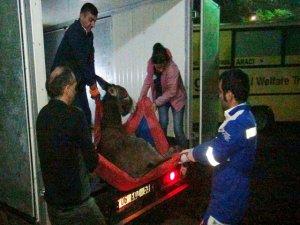 Bitlis'ten Muş'a eşek kurtarma operasyonu