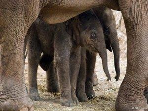 Filler ve gergedanlar iktidarsızların kurbanı oluyor