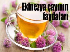 Ekinezya Çayının Faydaları