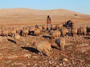 Bölgede hayvancılık canlandı