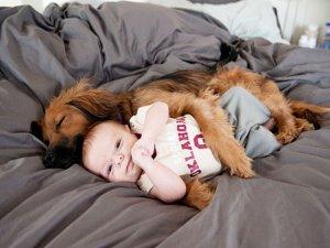 Çocukların hayvanlara ihtiyacı var