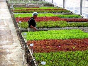 Süs bitkilerinde en fazla ihracat Hollanda'ya yapıldı