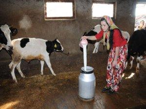 Süt üretiminde artış var