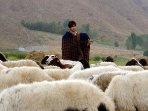Gidin çoban olun