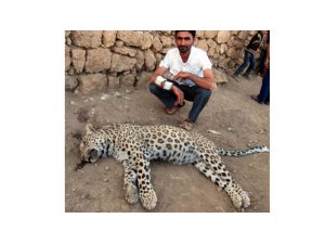 Çobana saldıran Leopar öldürüldü