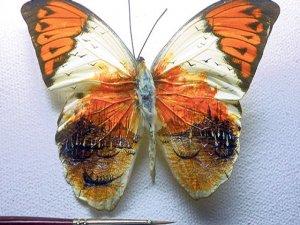 Kelebek kanadında dünya