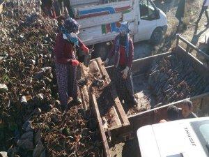 Kozluk'ta çiftçilere 5 bin 500 adet fıstık fidesi dağıtıldı