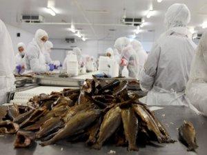 Keban'dan dünyaya balık ihraç edilecek