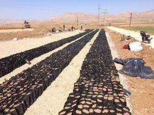 Gercüş'te çiftçi eğitim çiftliği inşaatına başlandı