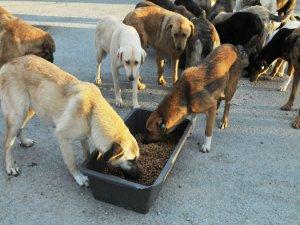 """Siirt'te sokak hayvanlarına karşı """"duyarlılık"""" uyarısı"""