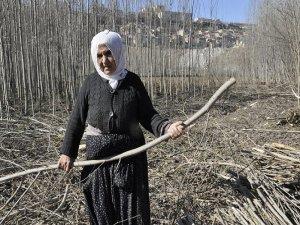 Ağaç dalları yoksullar için ısınmak demek