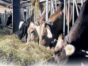 İthalat ile etin fiyatı 9 TL inecek