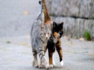 """Sokak kedilerinin de """"muhtarı"""" oldu"""