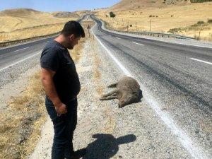 Karayoluna çıkan domuza otomobil çarptı
