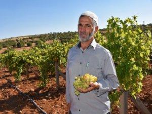 Organik tarımla köye tersine göç sağlandı